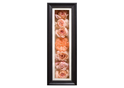 Preserved Pink Roses in a Shadow Box