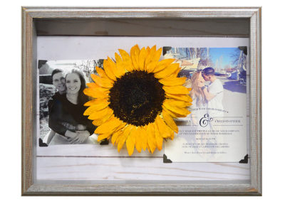 Preserved Sunflower in a Shadow Box