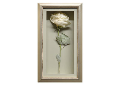 Shadow Box w/ Preserved White Rose