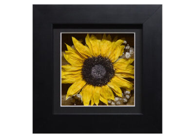 Shadow Box w/ a Preserved Sunflower