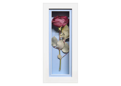 A Preserved Single Pink Rose in a Shadow Box
