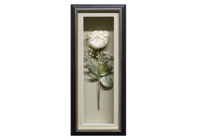 A Preserved Single White Rose in a Shadow Box