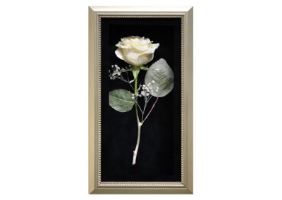 Pavé Shadow Box w/ Single Preserved White Rose