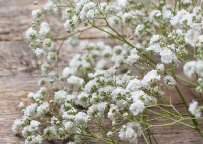 gypsophila-baby-breath