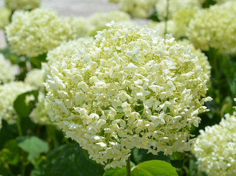 Flower Selections Fantastic Blooms Floral Preservation