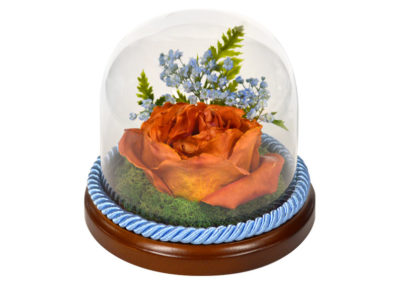 Preserved Flower Glass Encasement