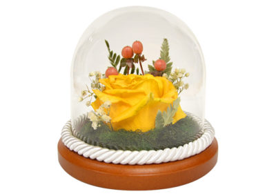 Preserved Yellow Rose
