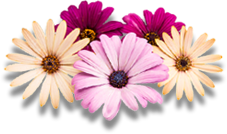 Professional memorial flower preservation and freeze drying for all special special occasion petals.