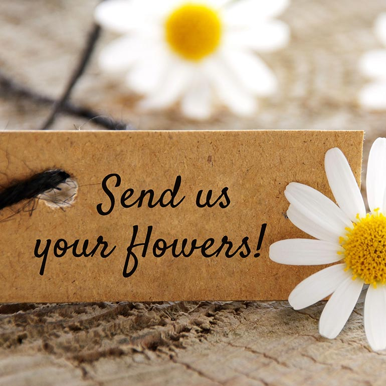 Ship us your flowers for freeze-drying.